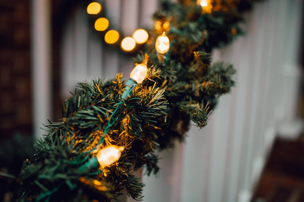 white string lights on green decor