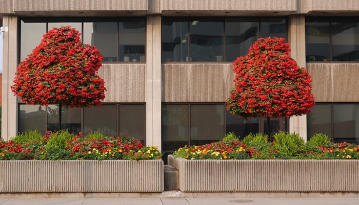 colorful landscaping outside an office building